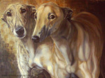Drawn Rampur Greyhound dogs