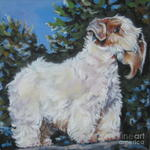 Drawn Sealyham Terrier dog