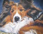 Drawn Shetland Sheepdog