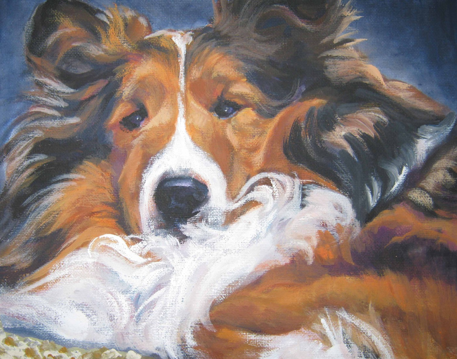 Drawn Shetland Sheepdog  wallpaper