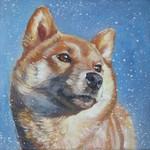 Портрет собаки Сиба-ину