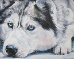 Drawn Siberian Husky dog