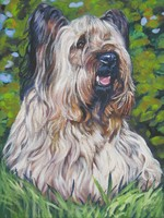 Drawn Skye Terrier