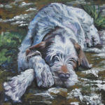 Drawn Spinone Italiano