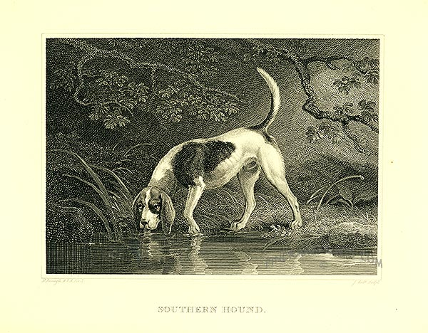 Drinking Southern Hound  wallpaper