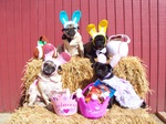 Easter Pug dogs