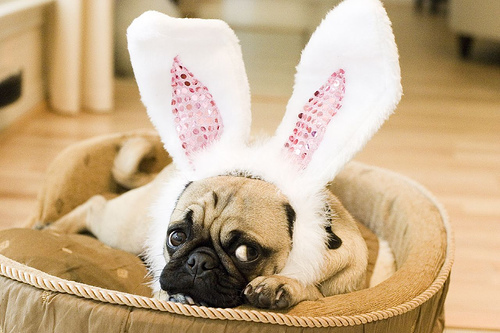 Easter Pug in the basket фото