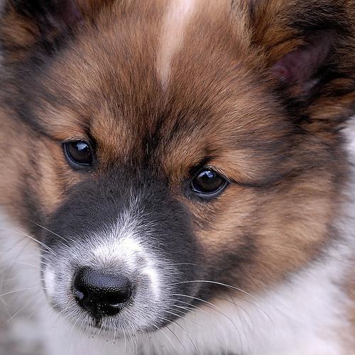 Морда собаки эло фото