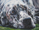English Setter dog drawing