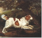 English Water Spaniel near the tree