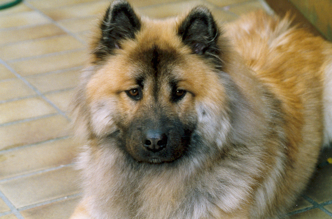 G Letter In Water Eurasier dog looking a...