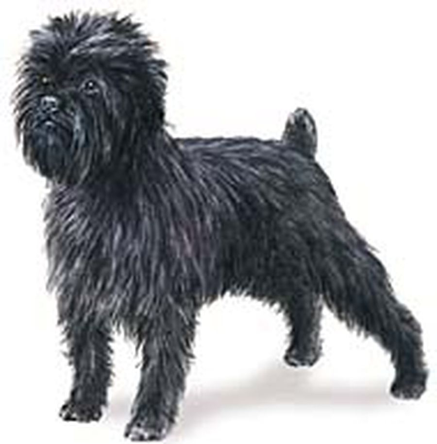 Figure Affenpinscher wallpaper