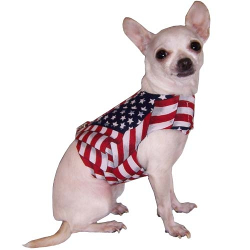 Flag day Chihuahua wallpaper