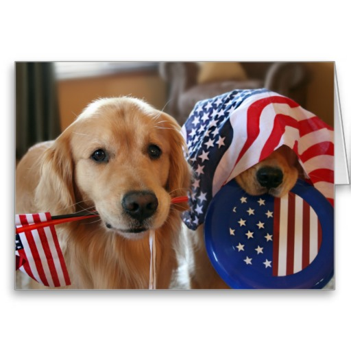 Flag Day Golden Retriever dogs фото