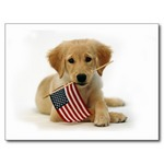 Flag Day Golden Retriever puppy