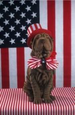 Flag Day Shar Pei