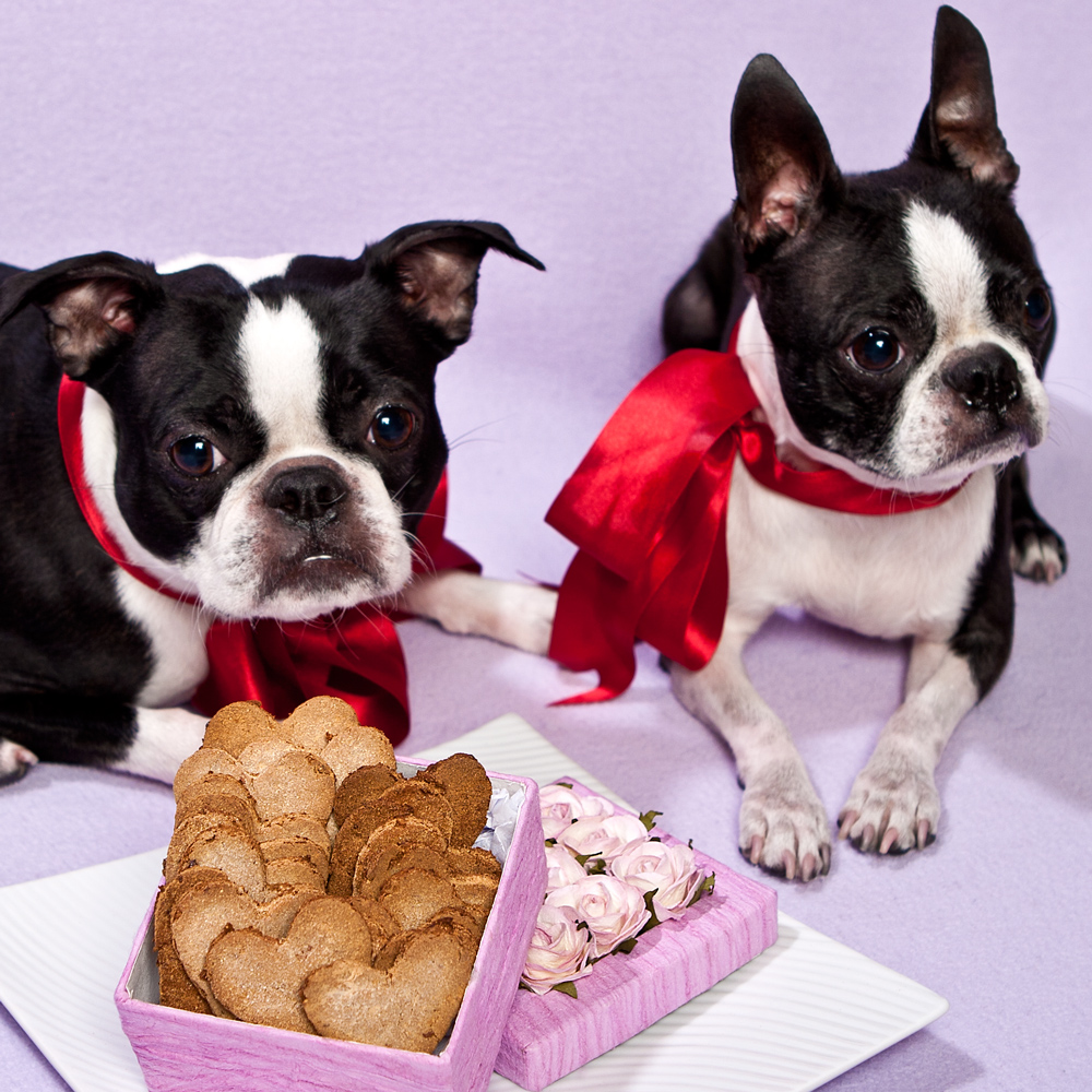 French Bulldogs Valentine's Day wallpaper