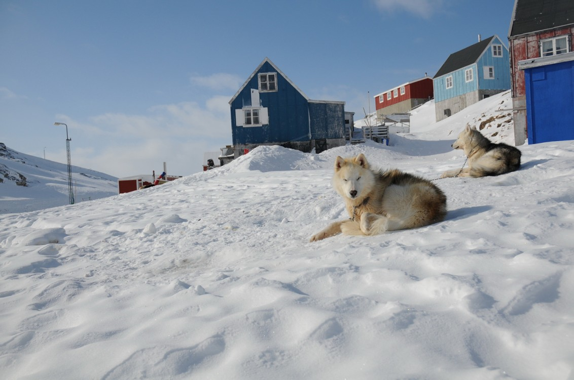 Greenland dogs on the mountain wallpaper