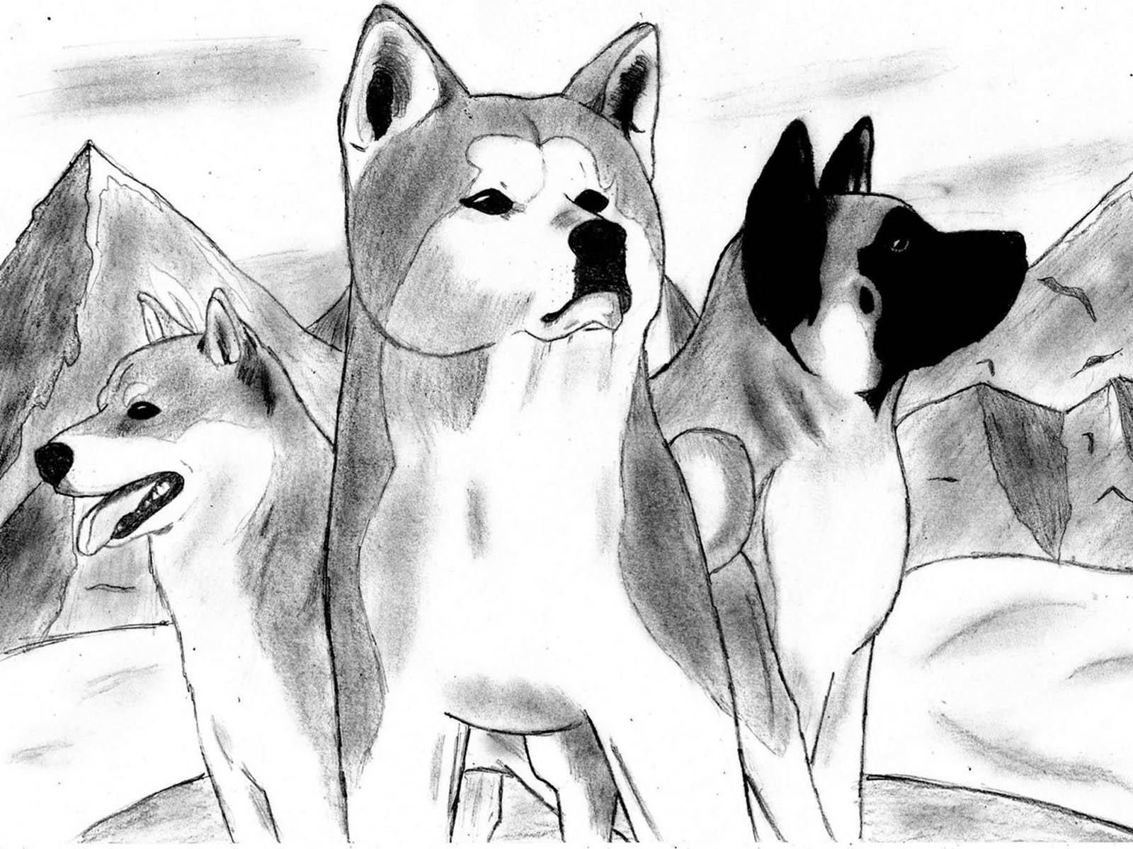 Серый рисунок с акита-ину фото