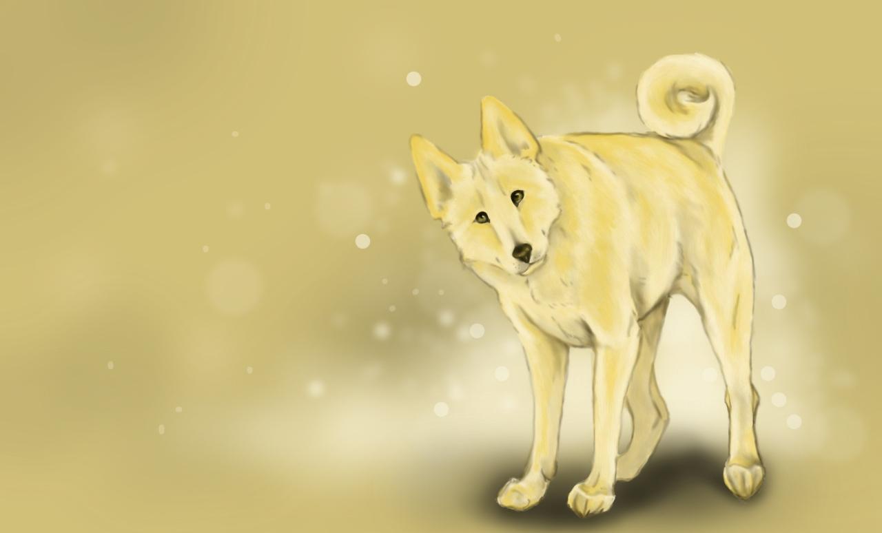 Серая ханаанская собака фото
