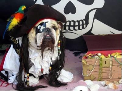 Halloween Bulldog pirate wallpaper