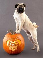 Halloween Pug portrait
