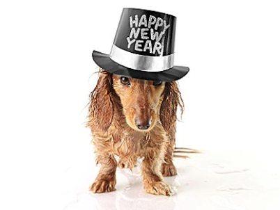 Happy New Year Dachshund фото