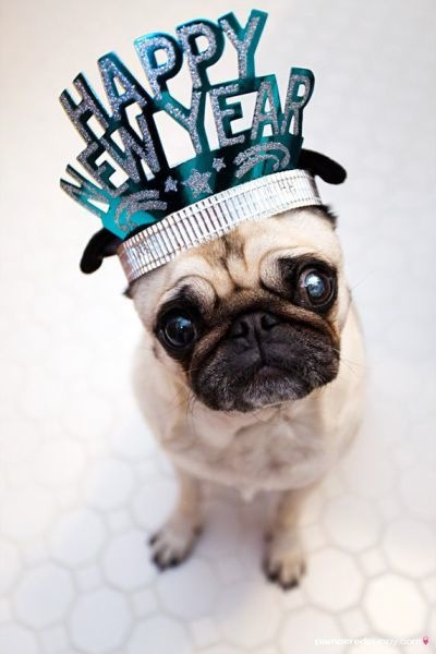 Happy New Year Pug dog фото