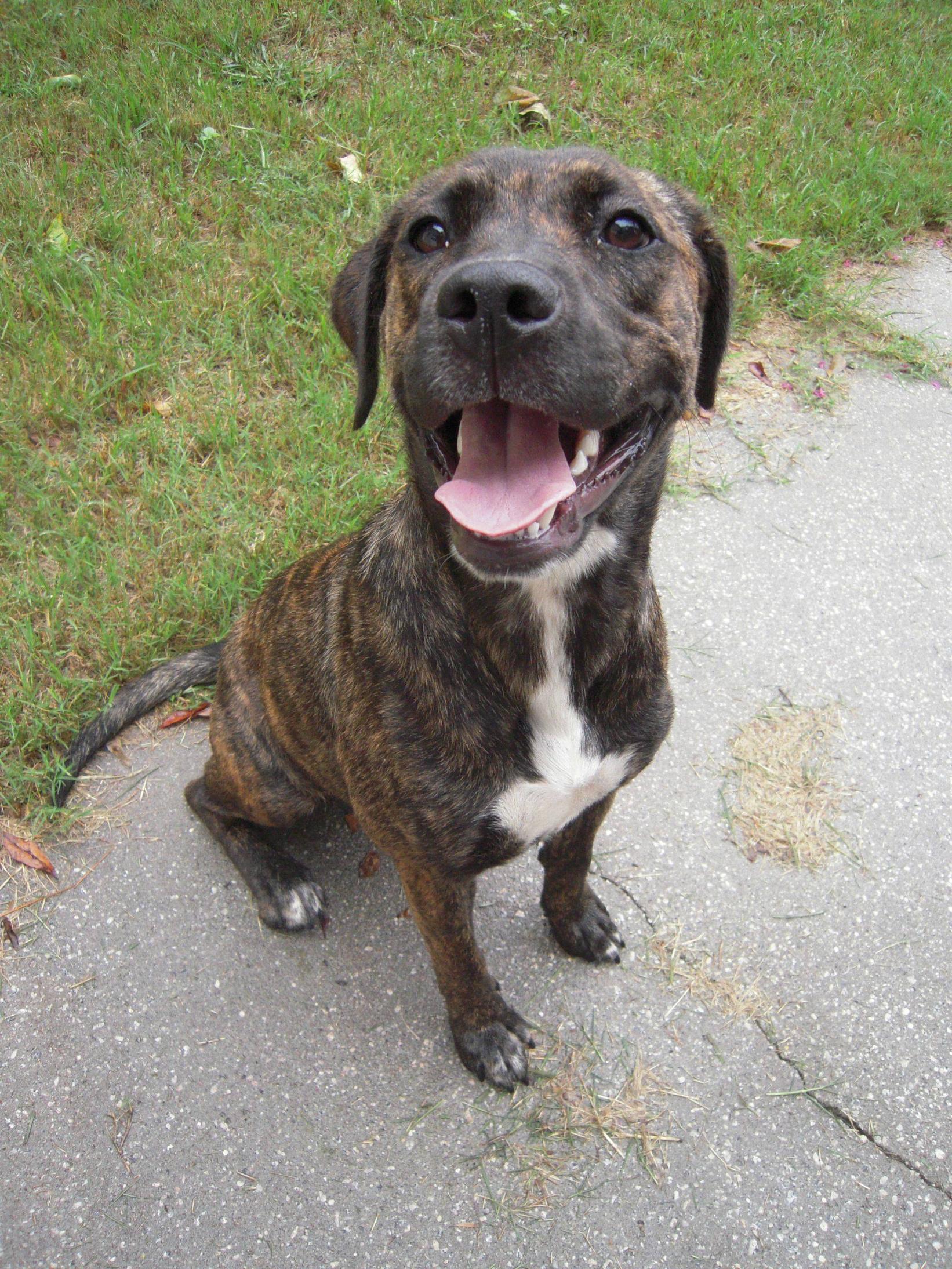 cute plott hound dog - photo #21