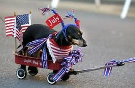 Independence Day Dachshund dog фото