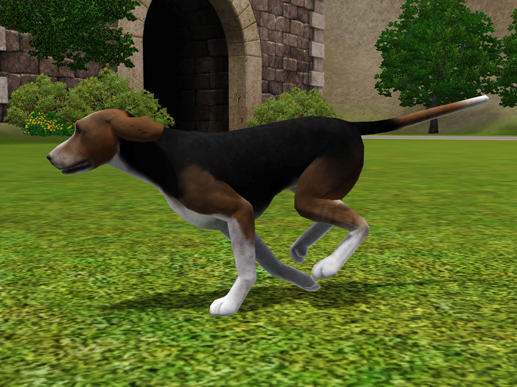 Jumping Finnish Hound dog  wallpaper