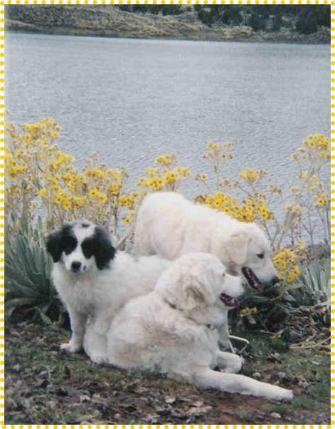 Собаки мукучиес фото