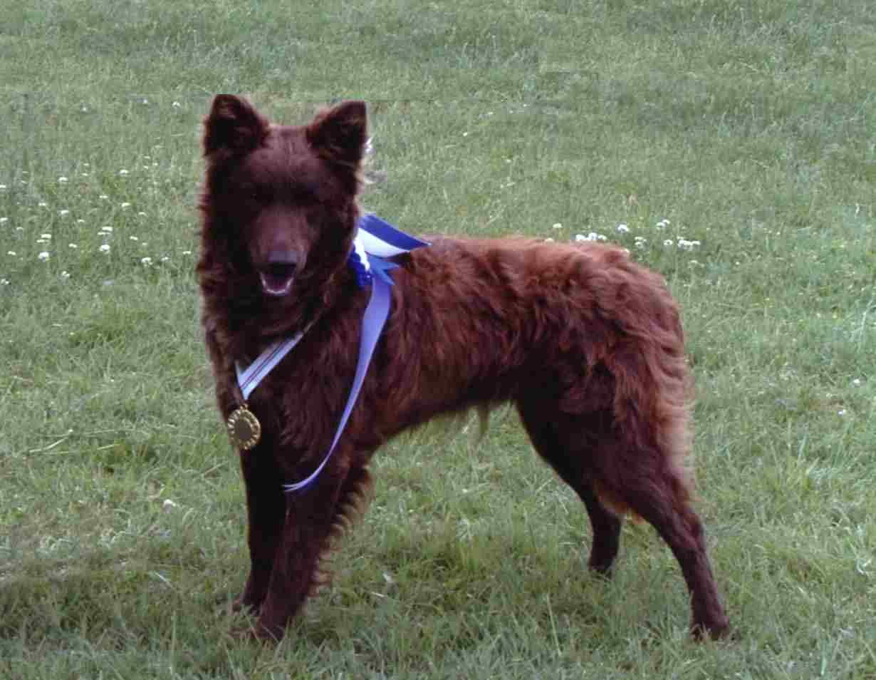 Собака муди-чемпион фото