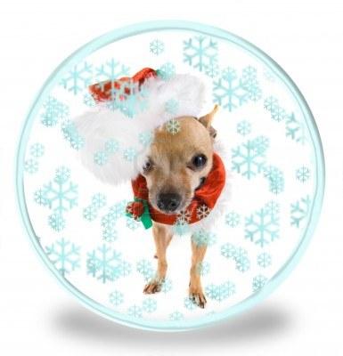 Новогоднее фото собаки чихуахуа фото