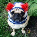 Nice Flag Day Pug