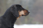 Nice Polish Hunting Dog