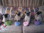 Nice Pug dogs Valentine's Day