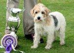 Nice Sporting Lucas Terrier
