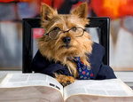 Norwich Terrier teacher
