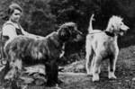 Old black and white afghan hound