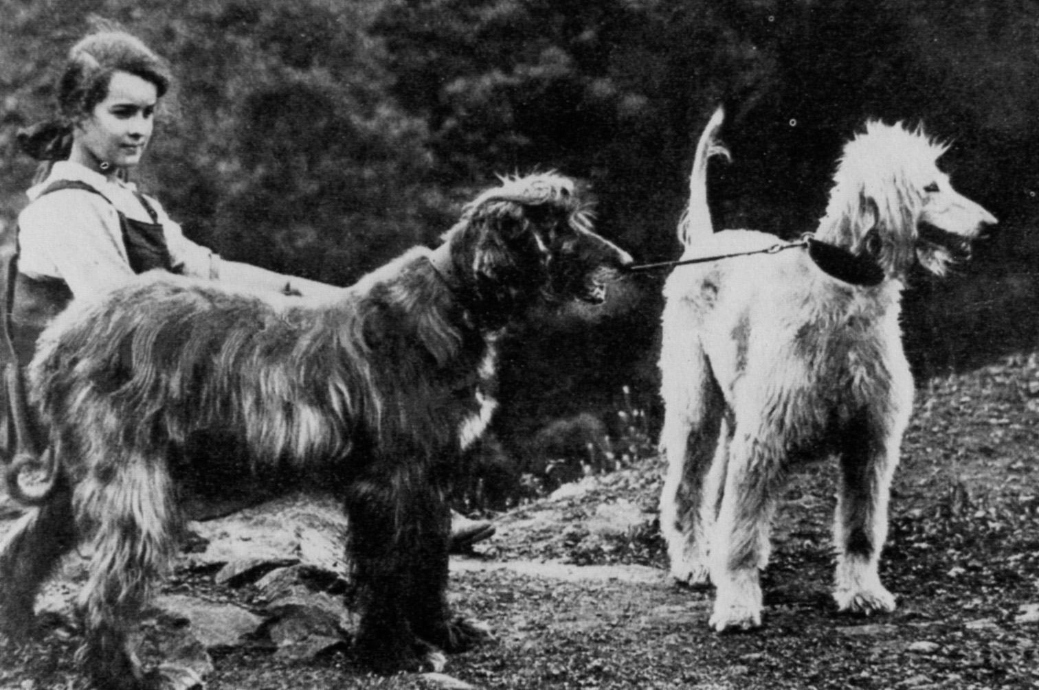 Old black and white afghan hound wallpaper