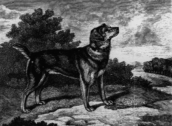 Собака породы староанглийский терьер фото