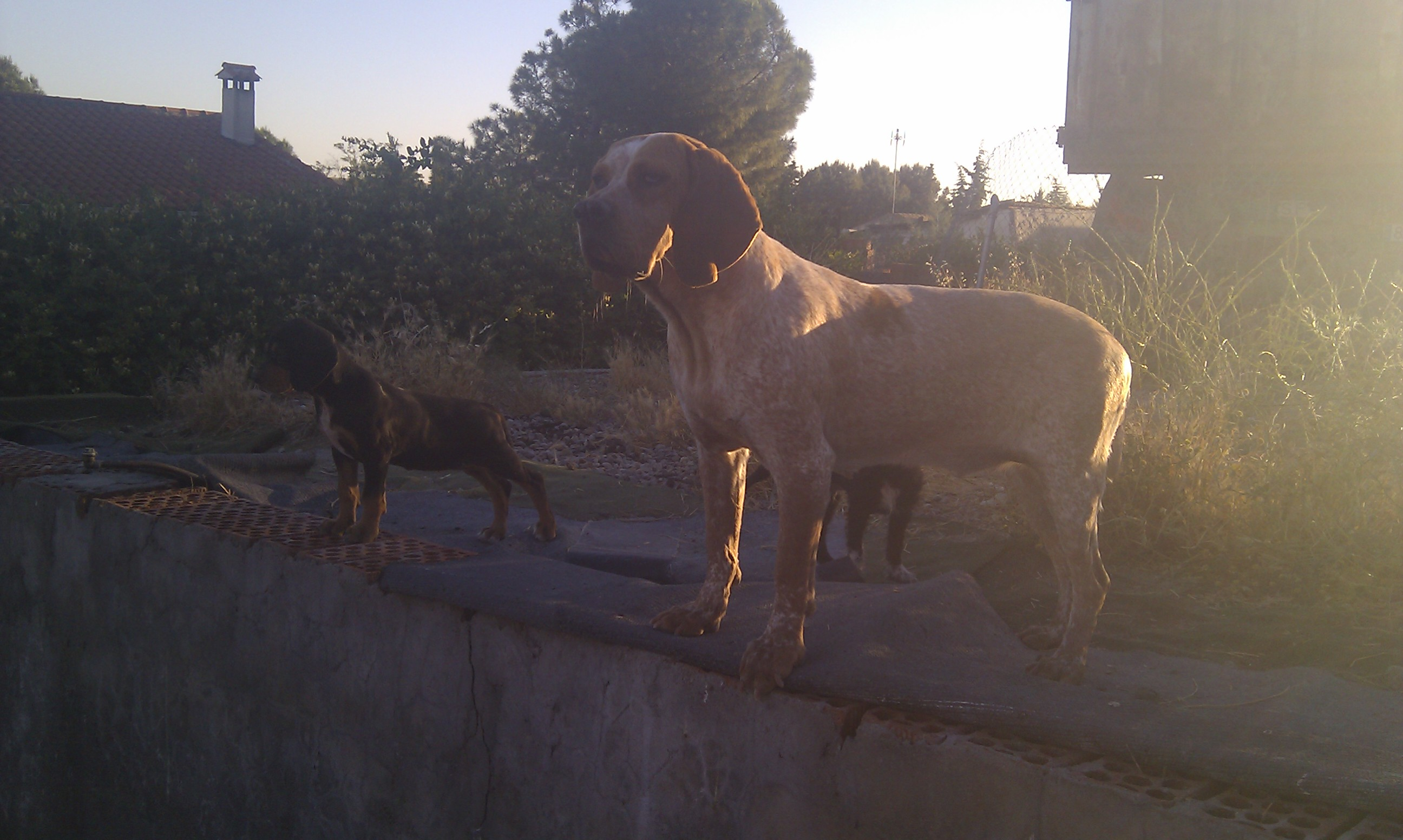 Pachon Navarro dogs on the roof wallpaper
