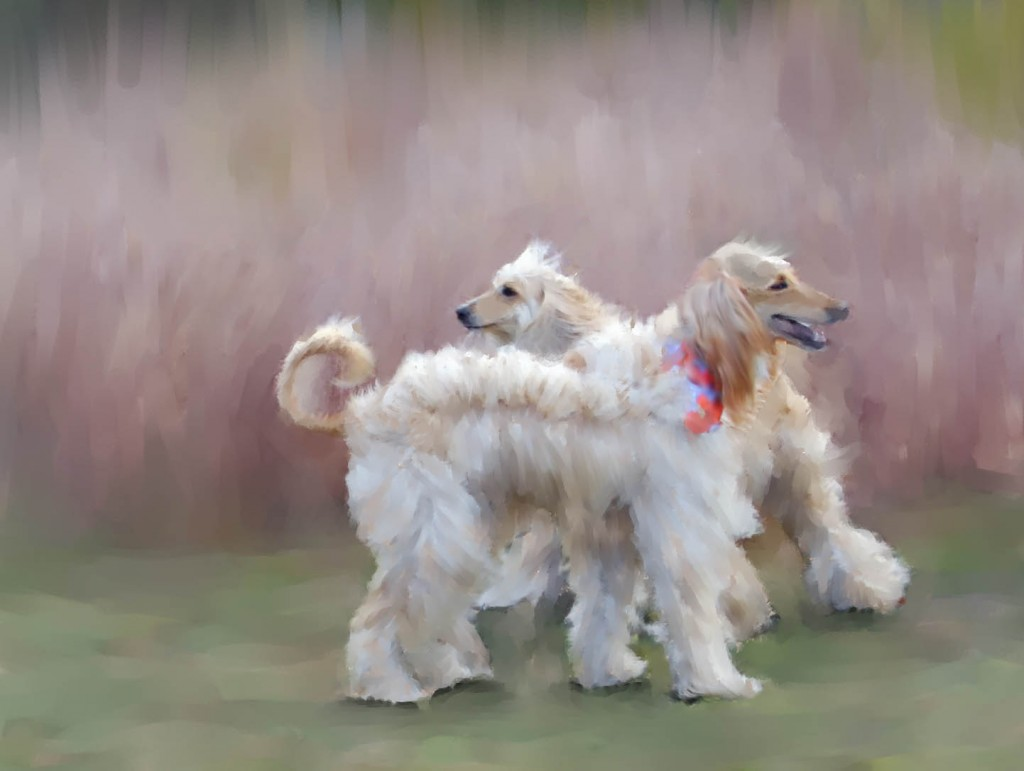 Painted Afghan Hound wallpaper