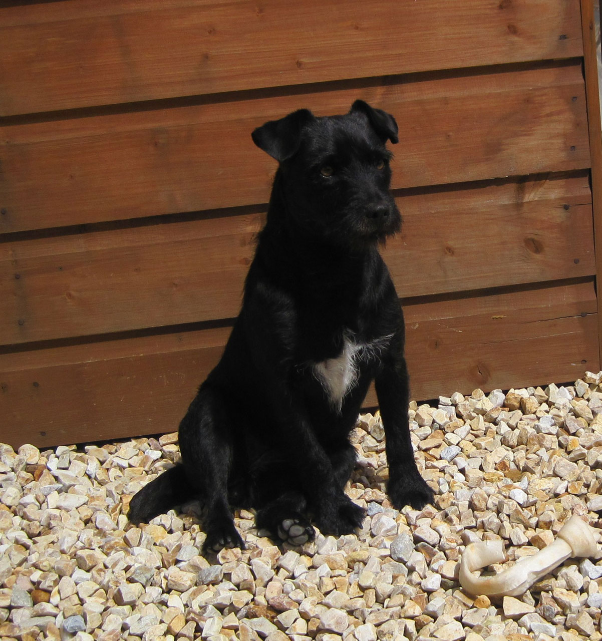 Patterdale Terrier dog near the house wallpaper