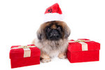 Pekingese and gifts