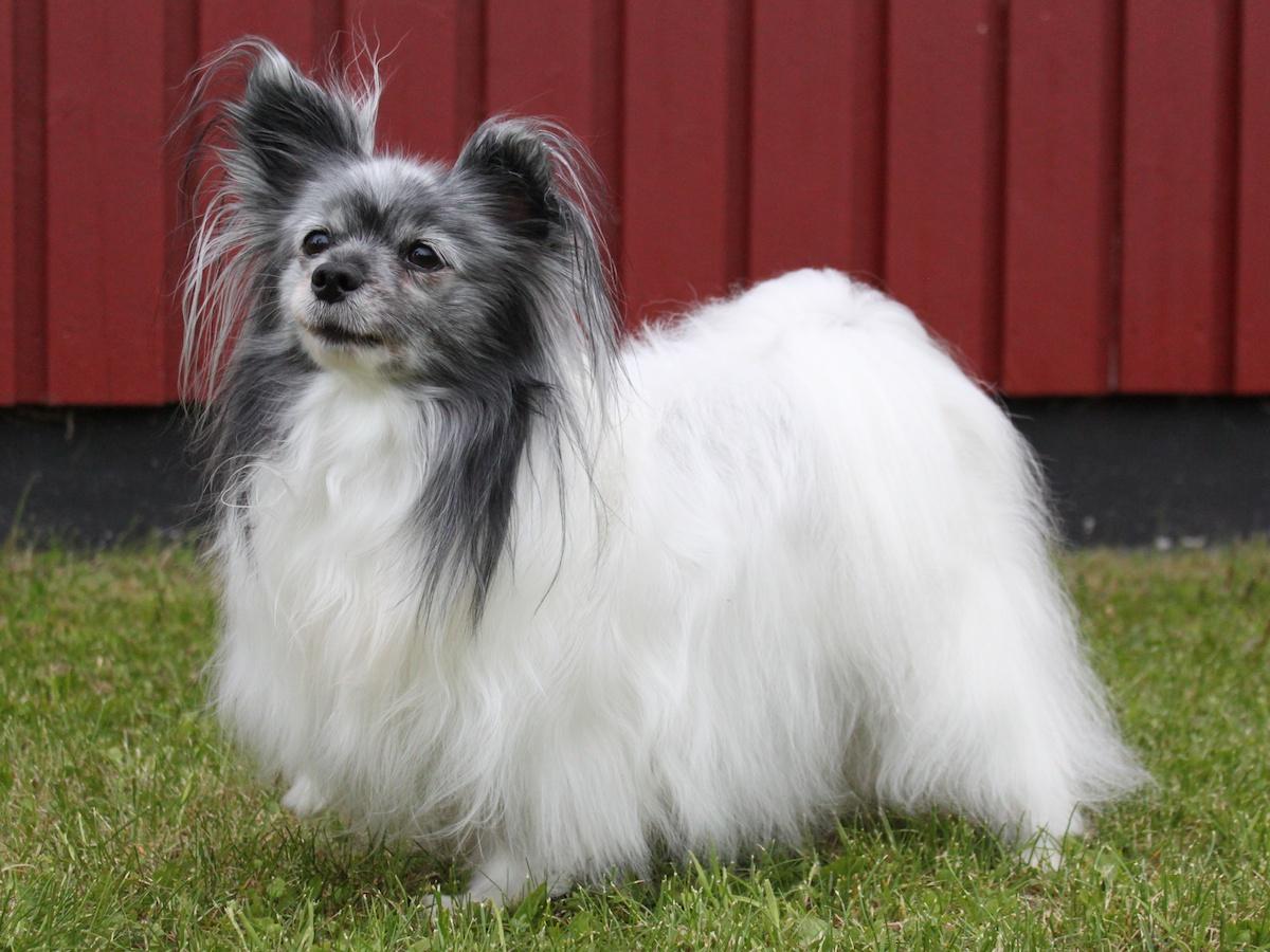 Собака фален на траве фото