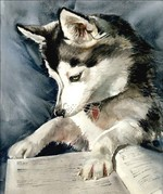 Drawn Alaskan Klee Kai