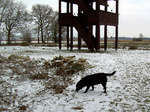 Polish Hunting Dog in the snow