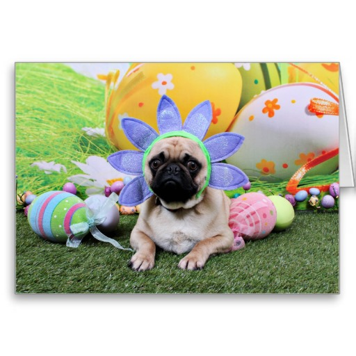 Resting Easter Pug wallpaper